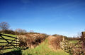 Hedge lined country trackway with gates - PhotoDune Item for Sale