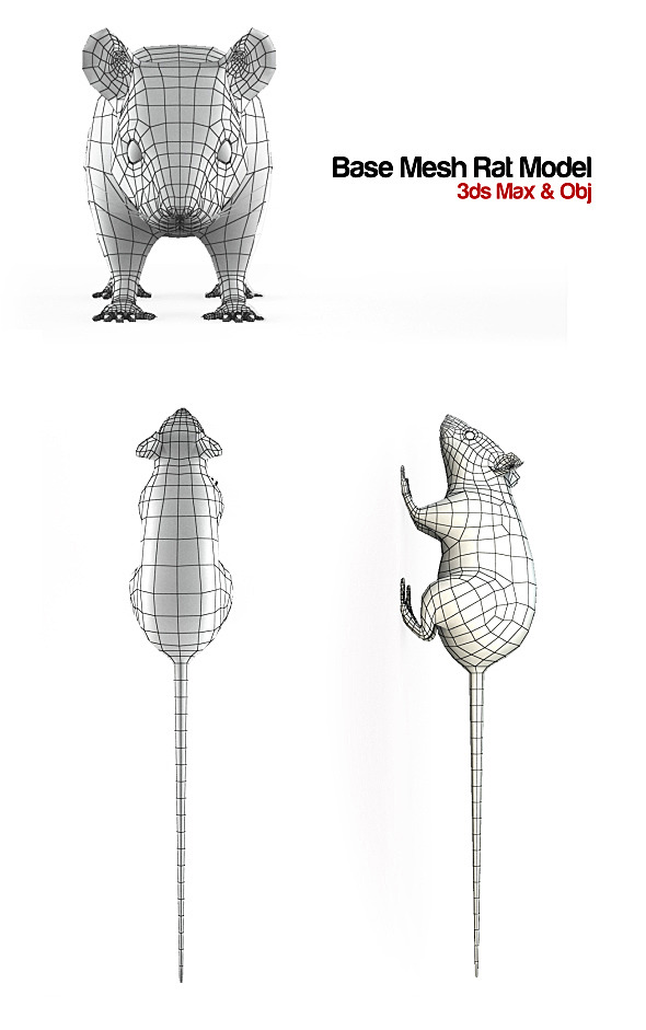 Base Mesh Rat Model - 3DOcean Item for Sale