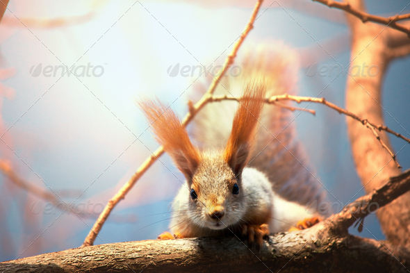 Squirrel - Stock Photo - Images