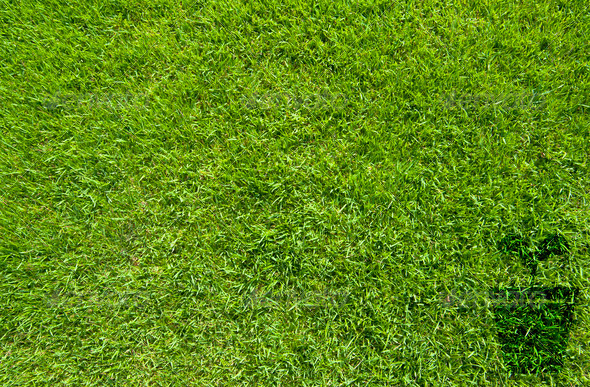 Pot icon on green grass texture and background - Stock Photo - Images
