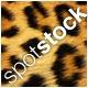 spotstock