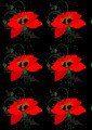 Poppies on a Black Seamless Background - PhotoDune Item for Sale