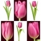 Collection of Pink Tulips