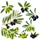 Green and Black Olives with Leaves - GraphicRiver Item for Sale
