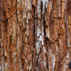 Rotted Tree Bark - GraphicRiver Item for Sale