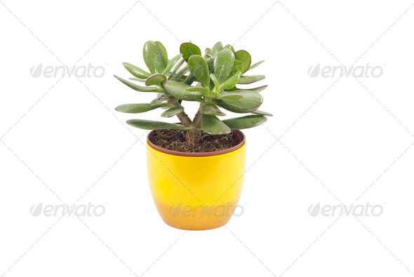 Succulent Plant - Stock Photo - Images