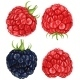 Raspberries and  Blackberry - GraphicRiver Item for Sale