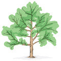 Simplified image - crone of tree - PhotoDune Item for Sale