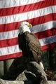 American Eagle - PhotoDune Item for Sale