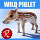 Wild piglet