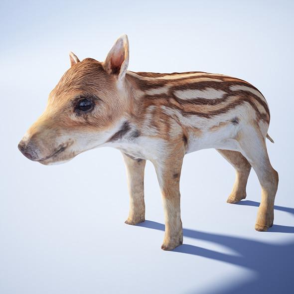 3DOcean Wild piglet 4327083