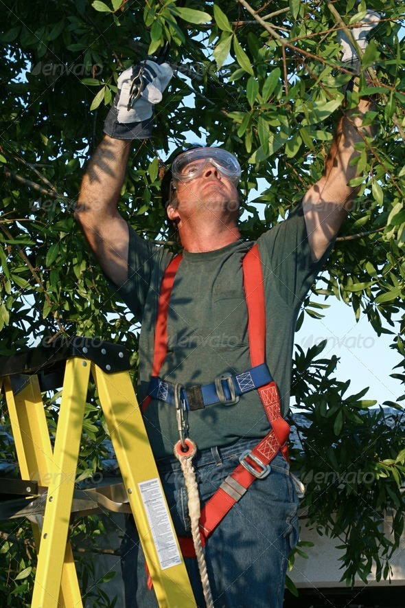 PhotoDune Tree Surgeon on Ladder 466155