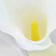 Calla Lily Wedding Invitation - GraphicRiver Item for Sale