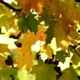 Leaves Of Autumn - VideoHive Item for Sale