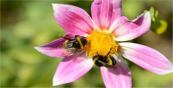 Bumblebee 10
