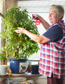 Mature housewife takes care of the flowers - PhotoDune Item for Sale