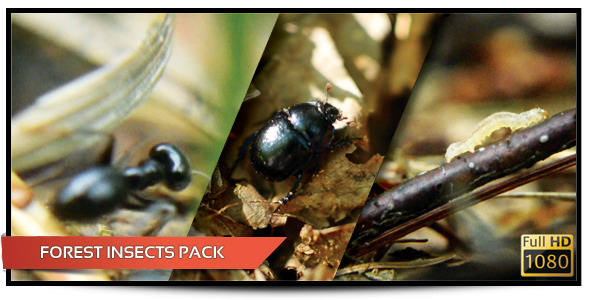 Forest Insects Pack