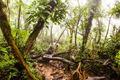Misty Jungle Scene - PhotoDune Item for Sale