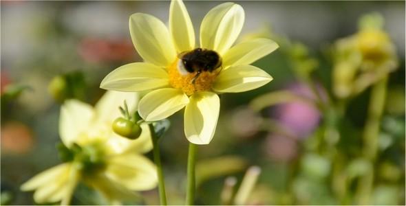 Bumblebee 11