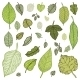 Green Leaves Set - GraphicRiver Item for Sale
