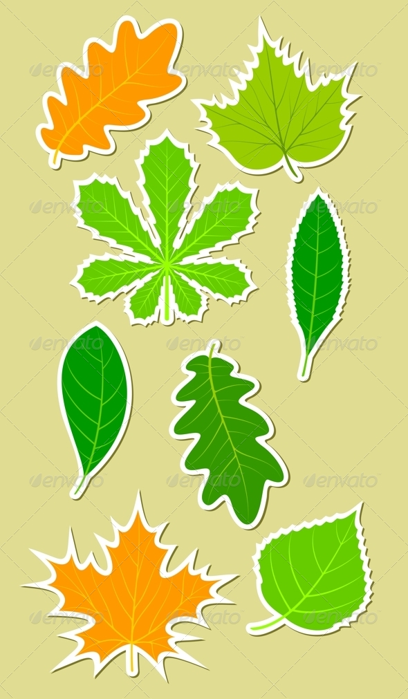 GraphicRiver Leaves of different plants 4262204