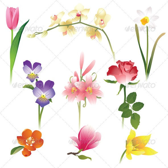 GraphicRiver Flowers 4353052
