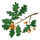 Oak Branch with Leaves and Acorns - GraphicRiver Item for Sale