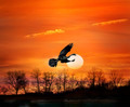 Bird At Sunset - PhotoDune Item for Sale