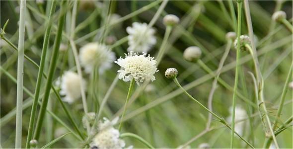 Bumblebee 14