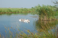 Danube Delta waterscape - PhotoDune Item for Sale