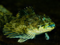 Fish on Display in a Salt Water Aquarium - PhotoDune Item for Sale