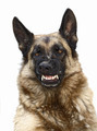 wild dog - PhotoDune Item for Sale