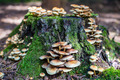 Tree stump with mushrooms - PhotoDune Item for Sale
