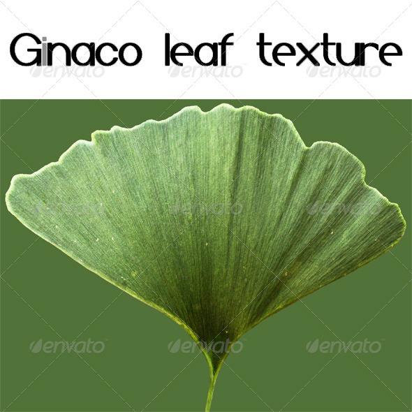 Ginaco Leaf Texture