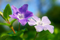 Drops on Violets - PhotoDune Item for Sale