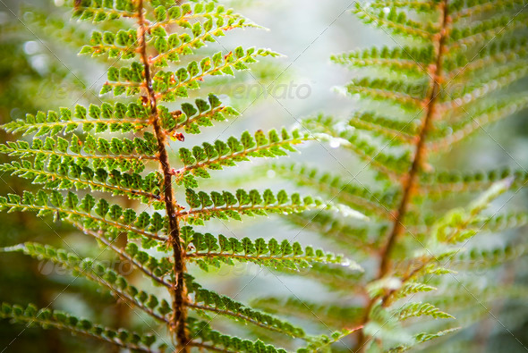 Fern Details - Stock Photo - Images