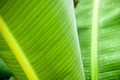 Plant Detail - PhotoDune Item for Sale