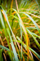 Plant Details - PhotoDune Item for Sale