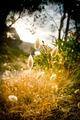 Glowing Foliage - PhotoDune Item for Sale