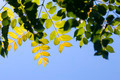 Leaves Background - PhotoDune Item for Sale