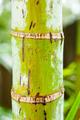 Palm Tree Jungle - PhotoDune Item for Sale