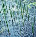 Rain on Pond - PhotoDune Item for Sale