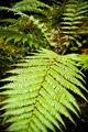 Leaf Detail - PhotoDune Item for Sale