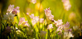 Wildflowers - PhotoDune Item for Sale