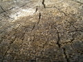 Tree Trunk Surface Texture - PhotoDune Item for Sale