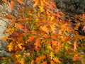 Orange and Yellow Tree Leaves in Autumn - PhotoDune Item for Sale
