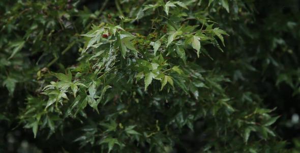 Rain Falling on Bush