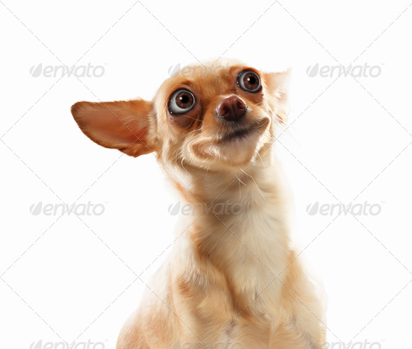 Funny dog portrait - Stock Photo - Images