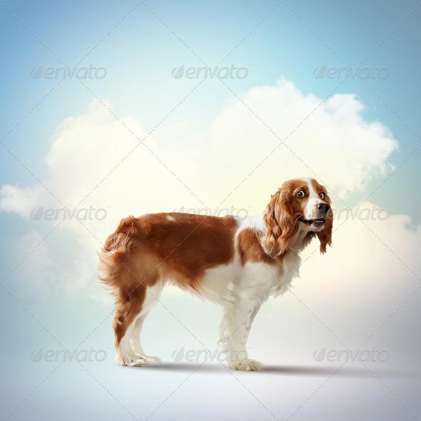 Funny dog portrait - Stock Photo - Images