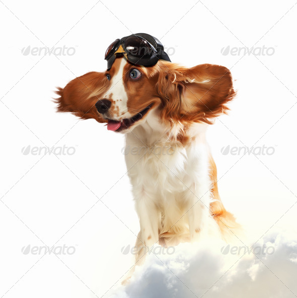 Dog-aviator wearing a helmet pilot. Collage - Stock Photo - Images